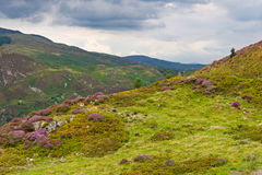 Precipice walk in Snowdonia Stock Photography