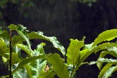 Precipitação da floresta úmida Foto de Stock Royalty Free