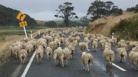 Precipitação dos carneiros filme