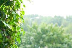 Precipitação na floresta Imagem de Stock