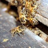 Precipitación de las abejas Imágenes de archivo libres de regalías