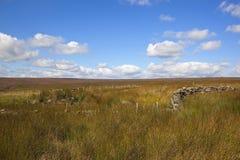 Precipitaciones y paisaje del brezo Foto de archivo