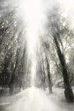Precipitazioni nevose Immagini Stock Libere da Diritti