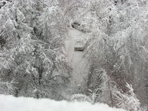 Precipitazioni nevose, alberi ed automobili in neve Fotografie Stock