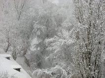 Precipitazioni nevose, alberi in neve Immagine Stock