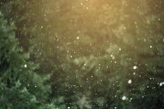 Precipitazioni nevose contro lo sfondo della foresta Fotografia Stock Libera da Diritti