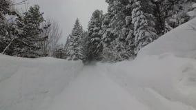 Precipitazioni nevose d'oscillazione dei rami di albero del forte vento nella foresta archivi video