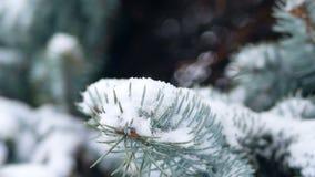 Precipitazioni nevose di Forest Park delle precipitazioni nevose archivi video