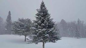 Precipitazioni nevose di inverno con l'abete rosso ed il pino stock footage