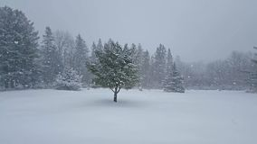 Precipitazioni nevose di inverno su paesaggio aperto video d archivio
