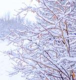 Precipitazioni nevose di una molla Immagini Stock