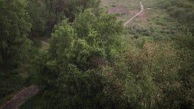 Precipitazioni nevose e pioggia persistente di estate Nel fondo sono gli alberi verdi, l'erba, percorso stock footage