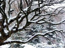 Precipitazioni nevose ed albero Fotografia Stock Libera da Diritti