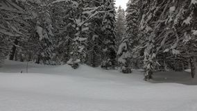 Precipitazioni nevose in Forest Ate Covered With Snow stock footage