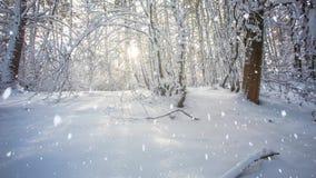 Precipitazioni nevose in foresta stock footage