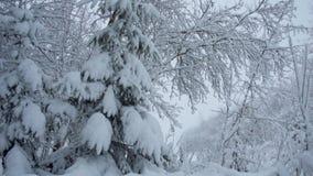 Precipitazioni nevose nel Forest Park Paesaggio di inverno in parco innevato stock footage