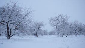 Precipitazioni nevose nel Forest Park Paesaggio di inverno in parco innevato video d archivio