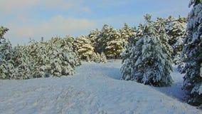 Precipitazioni nevose nel Forest Park Paesaggio di inverno in parco innevato Precipitazioni nevose pesanti archivi video