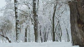 Precipitazioni nevose nel giorno di inverno nuvoloso scuro della foresta o del parco video d archivio