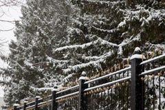 Precipitazioni nevose nella città Alberi innevati dietro il recinto fotografie stock