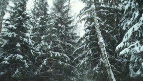 Precipitazioni nevose nella foresta video d archivio