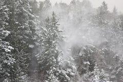 Precipitazioni nevose nella foresta fotografia stock libera da diritti