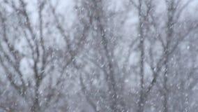 Precipitazioni nevose pesanti con i rami di albero neri confusi nei precedenti stock footage