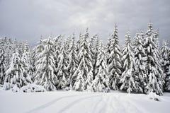 Precipitazioni nevose pesanti nel Apennines Immagine Stock