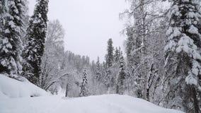 Precipitazioni nevose pesanti in una foresta di inverno archivi video