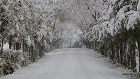 Precipitazioni nevose sugli alberi e sulle strade nevose stock footage