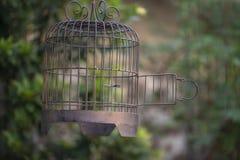 Precis öppet att frigöra fågeln royaltyfri foto