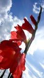 Precis blomma Royaltyfri Foto
