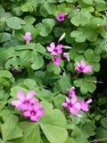Precis blommor Fotografering för Bildbyråer