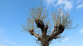Precis ett träd under vår royaltyfri fotografi