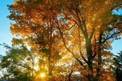 Precis för den guld- solnedgången royaltyfri bild