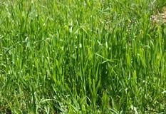 Precis grönt gräs Arkivfoton