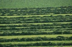 Precis mejat gräs på en jordbruksmark Royaltyfri Foto