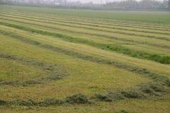 Precis mejat gräs på en jordbruksmark Royaltyfria Bilder