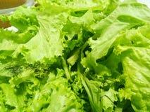 Precise alguns vegetais verdes imagens de stock