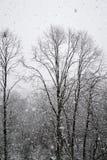 Precypitacj drzewa w śniegu Fotografia Royalty Free