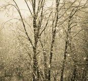 Precypitacj drzewa w śniegu Zdjęcie Royalty Free
