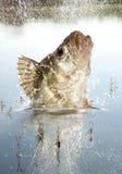Predador do rio Imagens de Stock