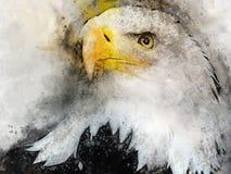 Predador do símbolo da pintura da aquarela do pássaro de Eagle Imagem de Stock