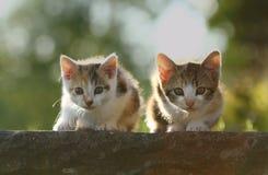 Predadores pequenos Fotografia de Stock