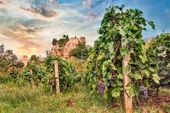 Predappio, Emilia Romagna, Italy: vineyard for wine production Stock Image