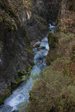 Predaselj creek with a blue fresh spring Royalty Free Stock Photography