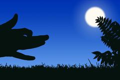 Predator. Silhouette of a wolf hunting at night Stock Photo