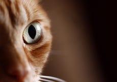 Predator. Macro detail of the cat eye Royalty Free Stock Image