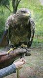 Predator. Big predator at open air Royalty Free Stock Photography