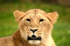 Predator Stock Images